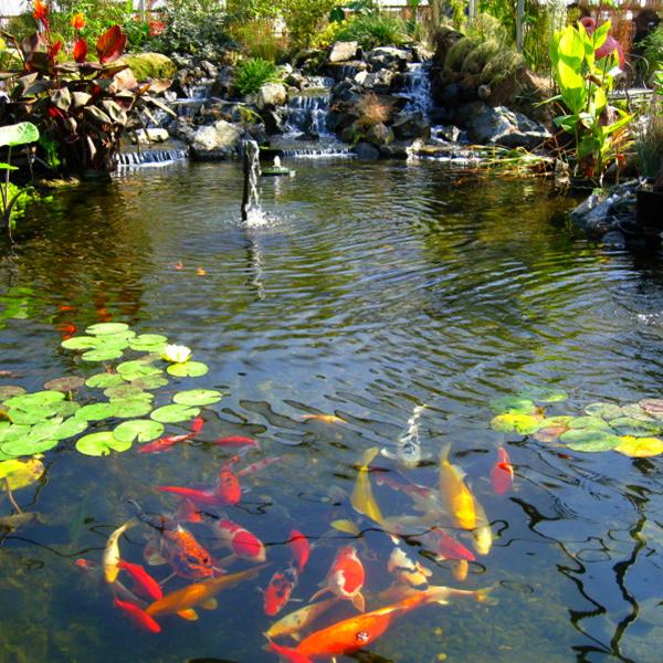 Retail-Pond Service