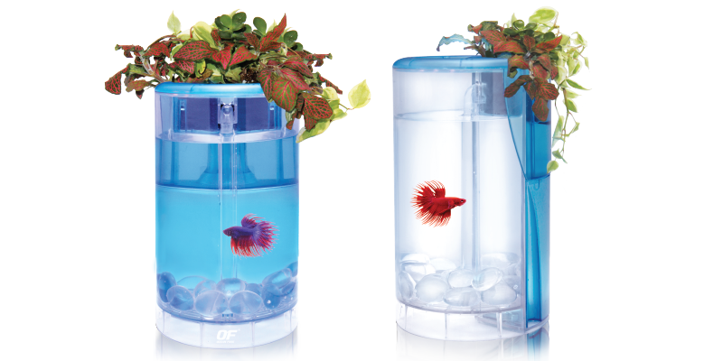 Of betta flora tank for Smart fish tank