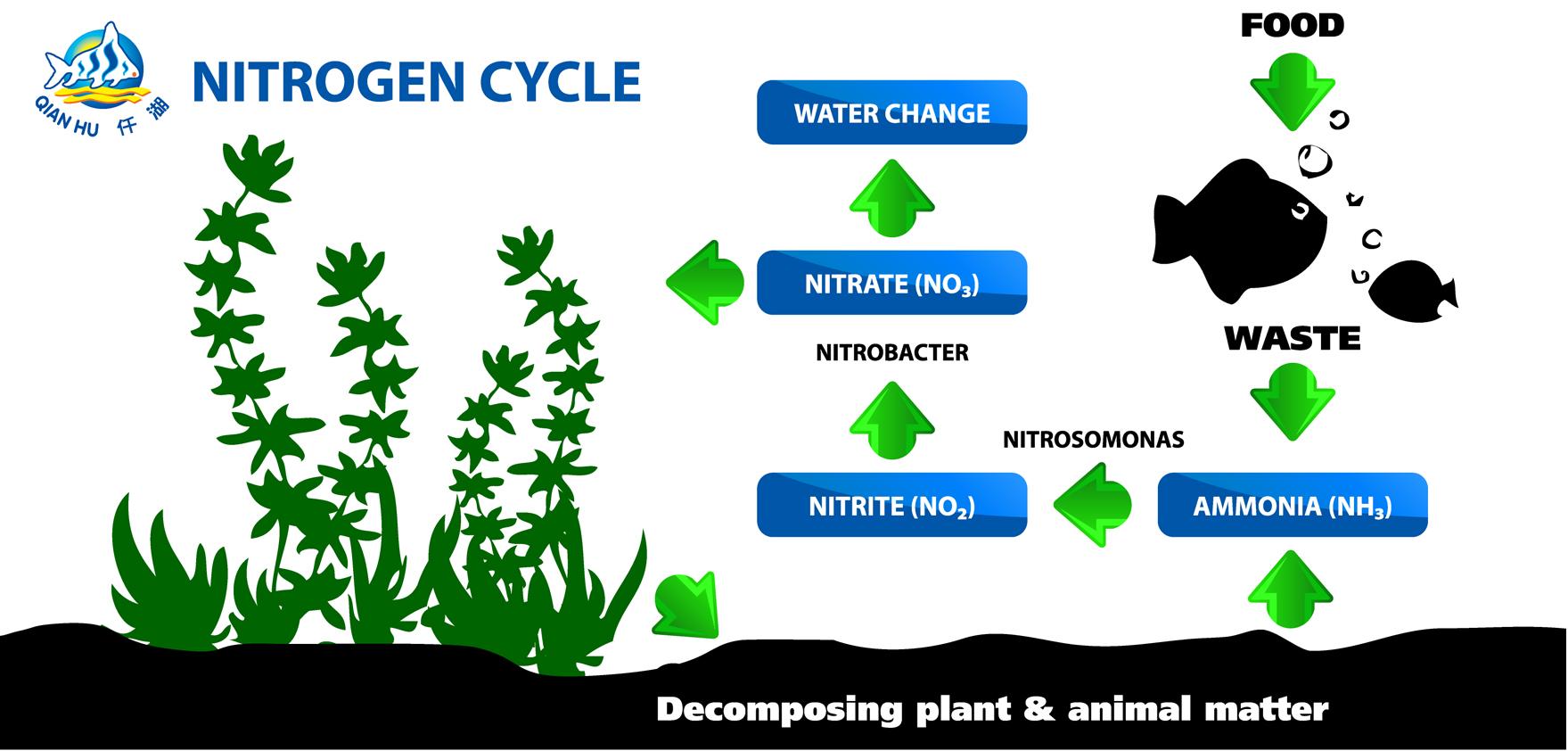 Understanding nitrogen cycle for Nitrogen cycle fish tank