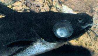 Common Aquarium Fish Diseases